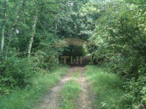 Forest path - Get It Write International