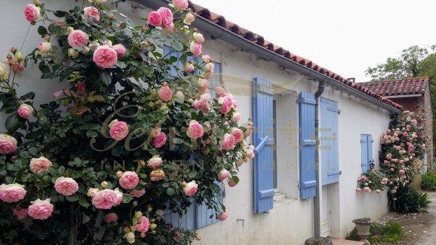 Pink roses blue shutters - Get IT Write International