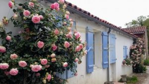 Pink roses blue shutters 2 - Get IT Write International