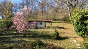 Spring blossom and hill cabin - Get IT Write International