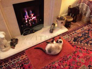 Siamese cat warm hearth - Get IT Write International