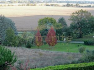 Early autumn trees contrast the surrounding green - Get IT Write International