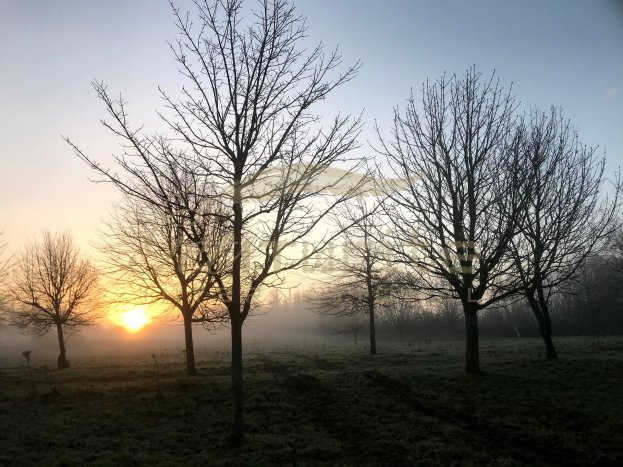 Glowing sunrise with mist shadow and trees - Get IT Write International