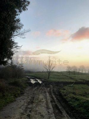 Winter path to mist - Get IT Write International